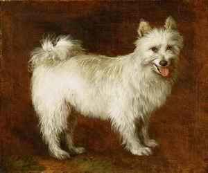 Thomas Gainsborough - Spitz Dog
