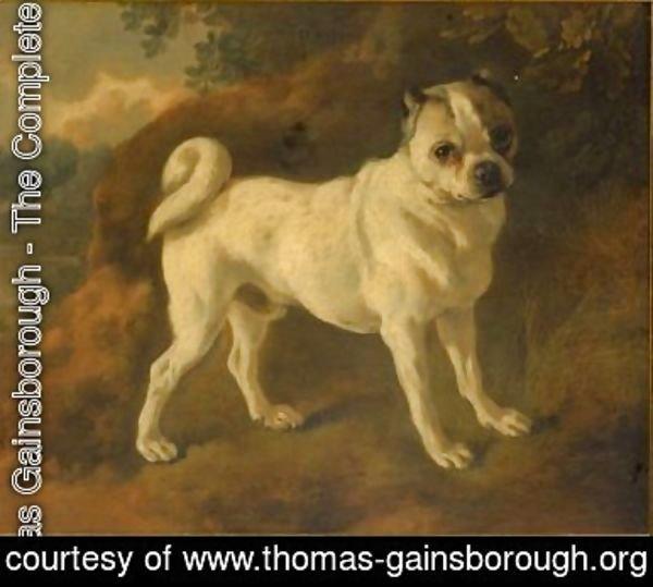 Thomas Gainsborough The Complete Works A Pug Thomas